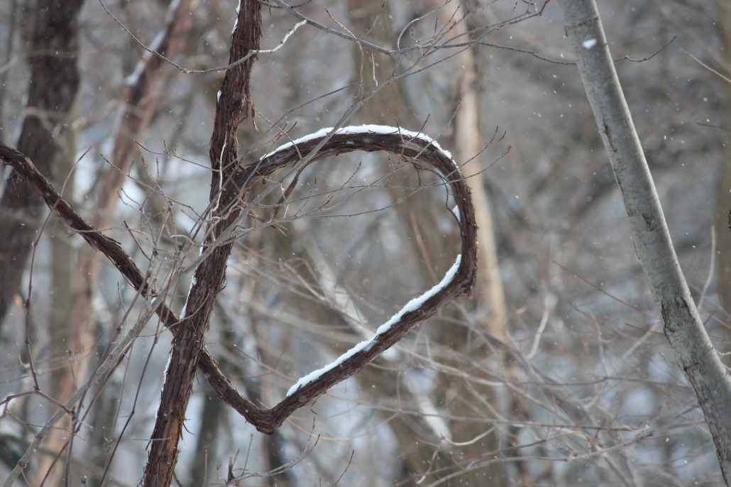 A grapevine forming half a heart