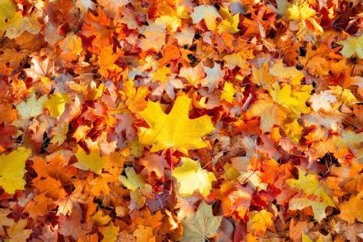 a pile of orange leaves