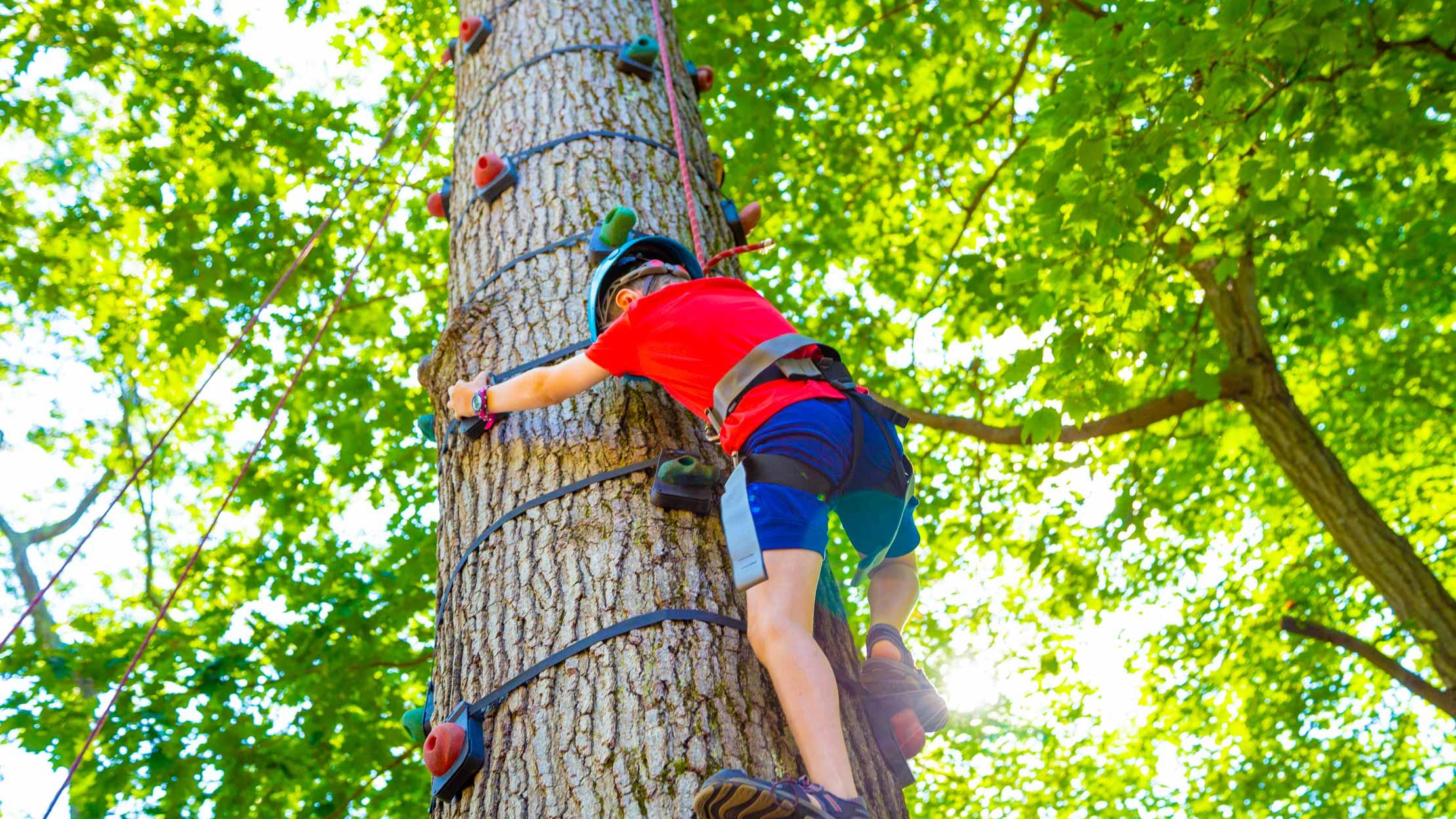 Camper climbing a tree