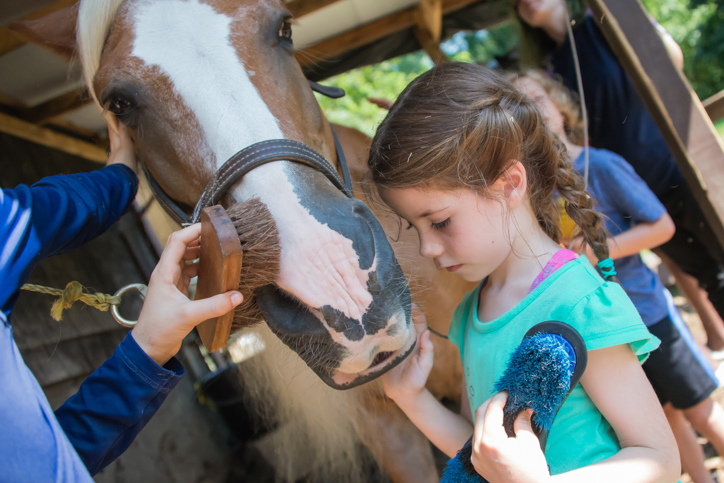 Camper brushing a horse