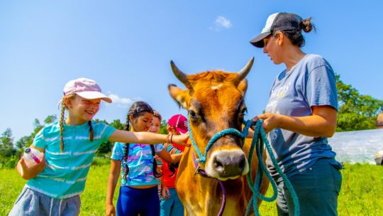 Campers petting a cow