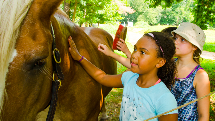 Campers petting and brushing a horse