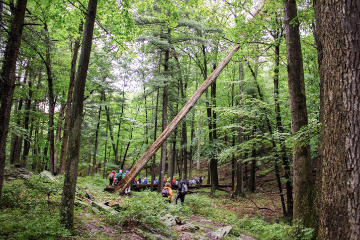 Campers hiking in the woods