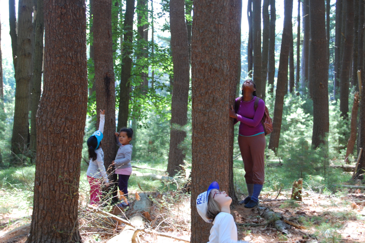 Campers in the woods looking up at the trees
