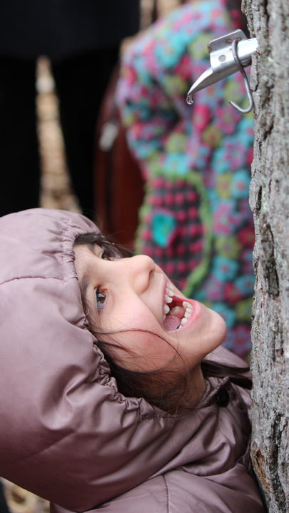 Young camper with open mouth waiting for sap from tree tap to drip down